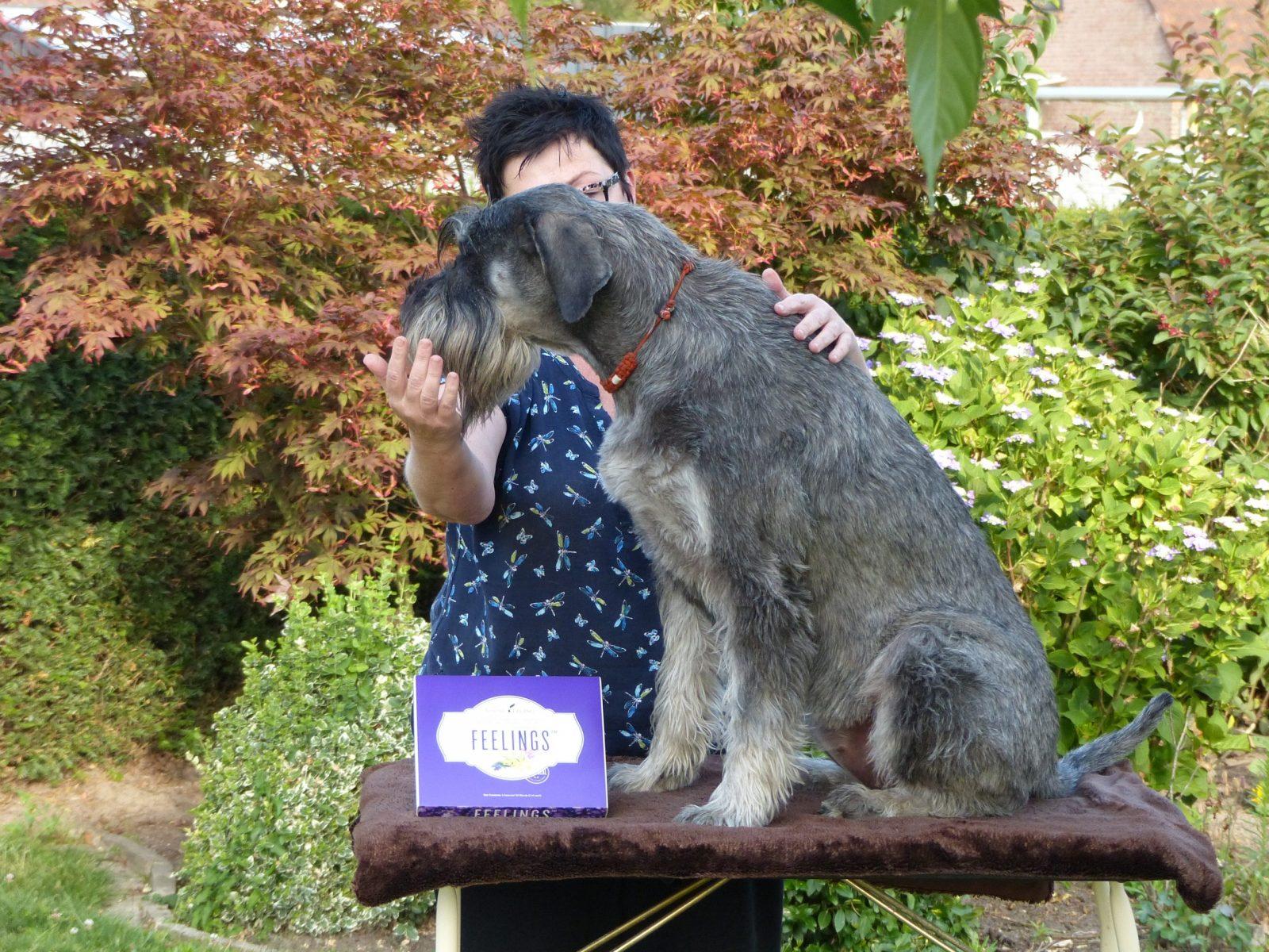hondenmassage